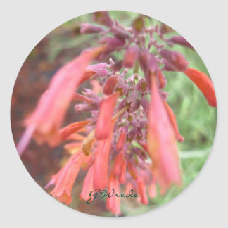 Agastache Coral Pink Stickers