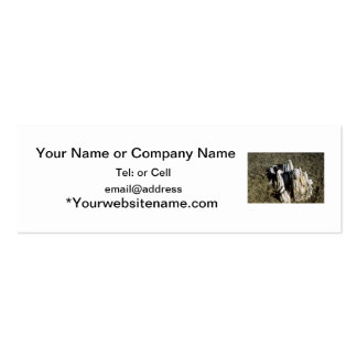 Agate fossil beds park items fossil tree business card template
