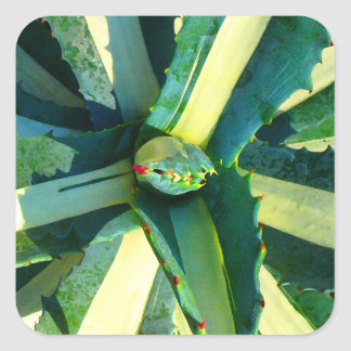 Agave Americana by Amy Vangsgard Stickers