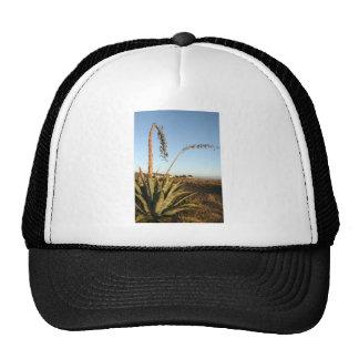 Agave americana century plant Chile coast Trucker Hat
