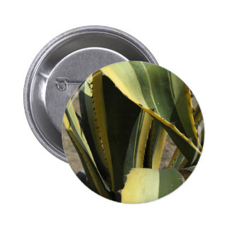 Agave Americana - Maguey Button