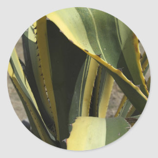 Agave Americana - Maguey Classic Round Sticker