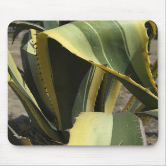 Agave Americana - Maguey Mouse Mats
