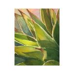 Agave attenuata watercolor by Debra Lee Baldwin Canvas Print