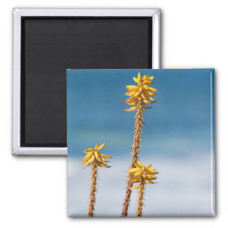 Agave by the ocean magnet