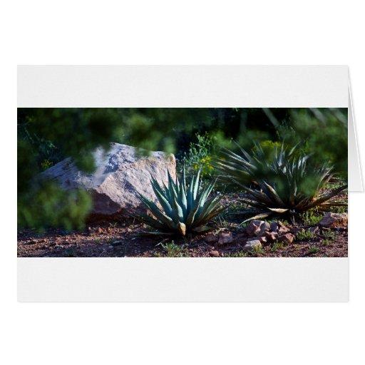Agave cactus card