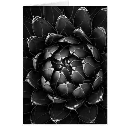Agave Cactus Greeting Card