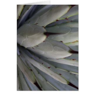 agave cactus macro - nature photography card