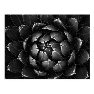 Agave Cactus Postcard
