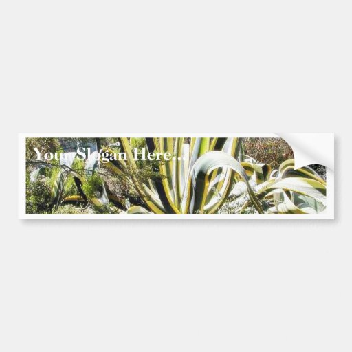 Agave Cactuses Bumper Sticker