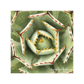 Agave 'Cream Spike' photo by Debra Lee Baldwin Canvas Print