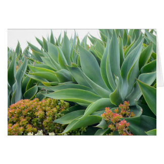 Agave Garden Invitation