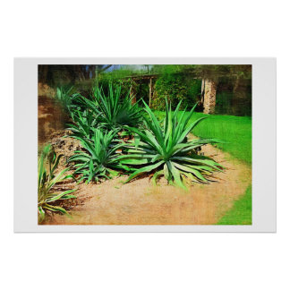 Agave, Oil painting, Tropical Collection Poster