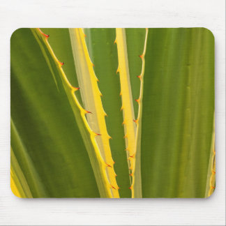 Agave Plant Abstract Mouse Pad