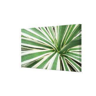 Agave Plant Canvas Print