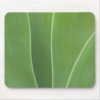 Agave Plant Close Up Mouse Pad