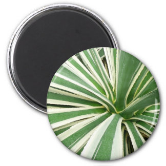 Agave Plant Green and White Stripe 2 Inch Round Magnet