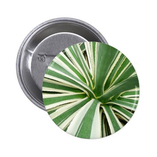 Agave Plant Green and White Stripe 2 Inch Round Button
