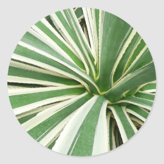 Agave Plant Green and White Stripe Classic Round Sticker