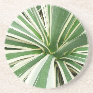 Agave Plant Green and White Stripe Coaster