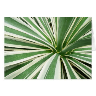Agave Plant Green and White Stripe Greeting Card