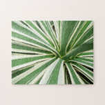 Agave Plant Green and White Stripe Jigsaw Puzzle
