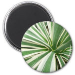 Agave Plant Green and White Stripe Magnet
