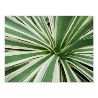 Agave Plant Green and White Stripe Poster