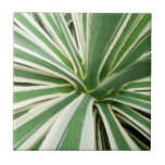 Agave Plant Green and White Stripe Tile