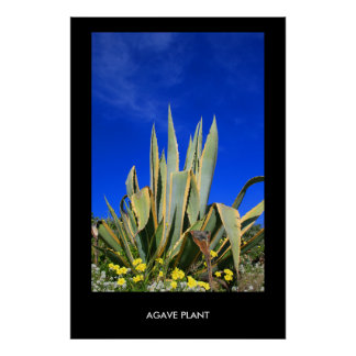 Agave Plant Poster,Print Poster