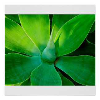 Agave Posters