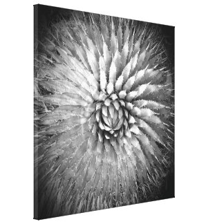 """Agave Spikes Black and White on Canvas 22"""" x 22"""" Canvas Prints"""