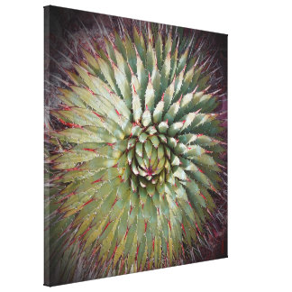 """Agave Spikes Print on Canvas 22"""" x 22"""" Stretched Canvas Prints"""