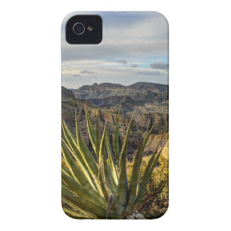 Agave Stretched Towards the Sun iPhone 4 Cover