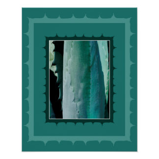 Agave tequilana - Blue Agave plant Poster
