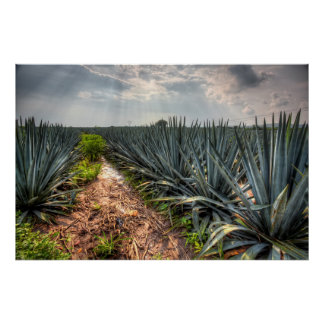 Agave Tequilana Poster
