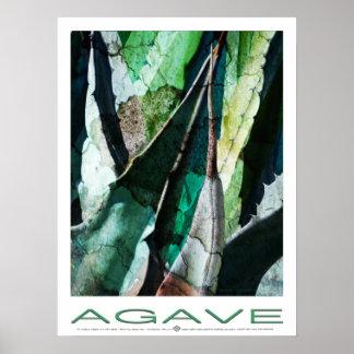 Agave Thorn Grenstone Poster