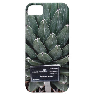 Agave Victoria Photo iPhone SE + iPhone 5/5S iPhone SE/5/5s Case