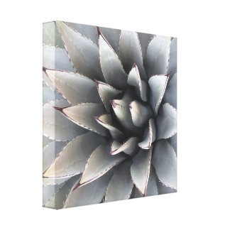 "Agave Wrapped Canvas - 12"" x 12"", 1.5"", Single"