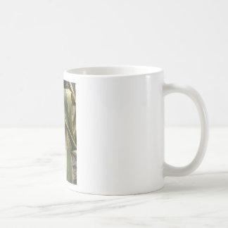 Agavo americana - Maguey Taza De Café