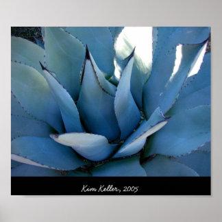 Agavo azul póster