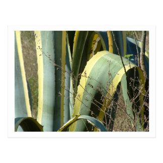 agavo tarjetas postales