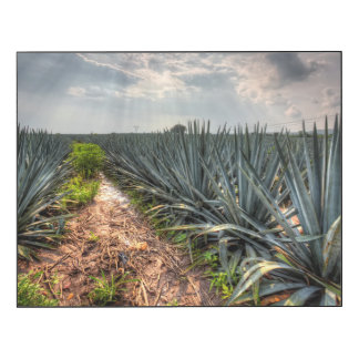 Agavo Tequilana Impresión En Madera