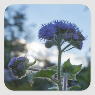 Ageratum Floss Flower Floral Square Stickers