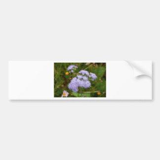 Ageratum flower in bloom bumper sticker