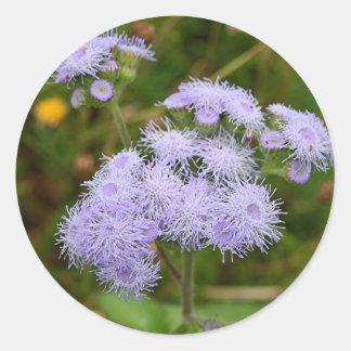 Ageratum flower in bloom classic round sticker