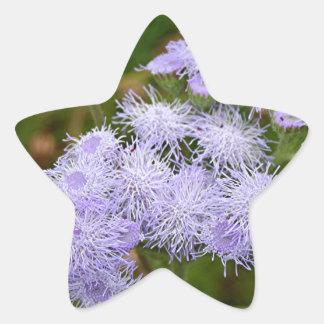 Ageratum flower in bloom star sticker