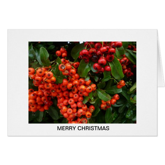 Aggelikis Christmas Berries Card
