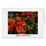 Aggelikis Christmas Berries Cards