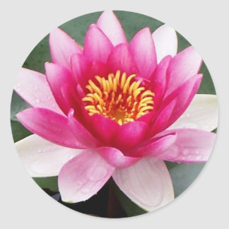 Aggelikis Pink Waterlilly Design Classic Round Sticker